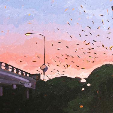 Bats at Waugh Street Bridge