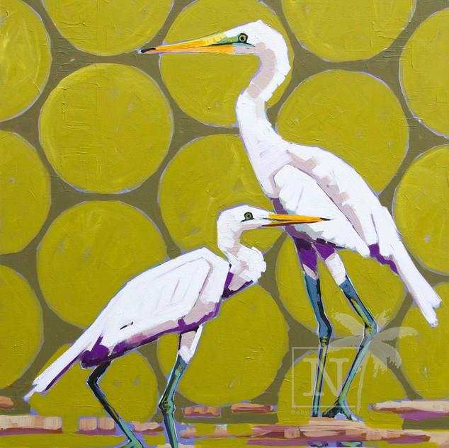 Egrets in Green