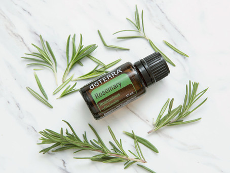 Rosemary, o PODEROSO óleo de Alecrim!