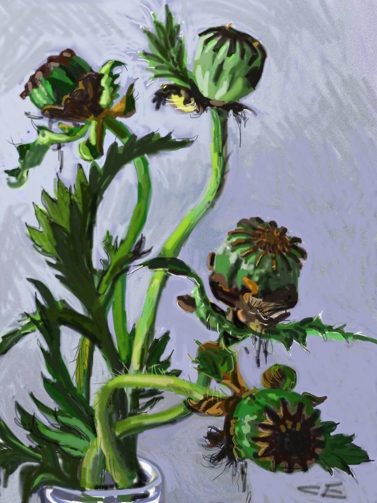 Poppy Seed Heads.