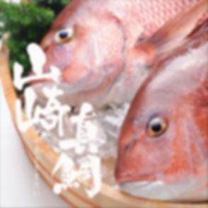 山崎真鯛.JPG