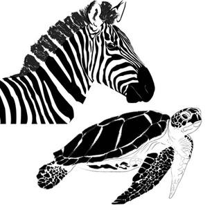 Zebra and turtle