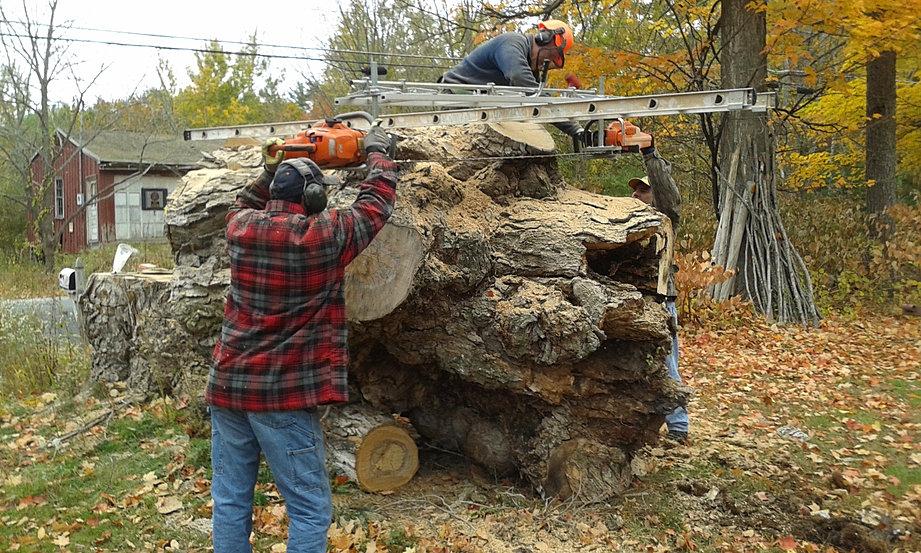 First Cut Maple Log