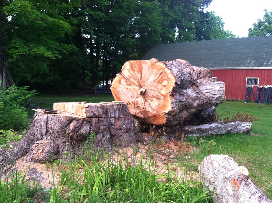 200 Year Old Maple Log