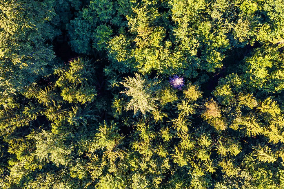 aerial-view-of-green-spruce-forest-in-swabian-alps-WDF06140 (2).jpg