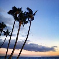 Palm Trees at Sunset.jpg