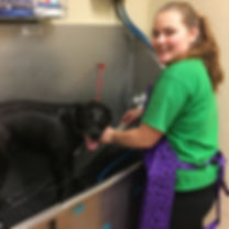 Dog baths, Dog Grooming, Dog Wash