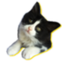 May the Paws Newsletter 4.png