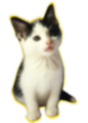 May the Paws Newsletter 2 (00000002).png