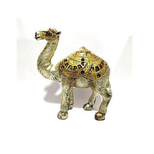 Καμήλα  /Νότος άστρο 1