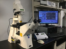 a microscope known as zeiss motormaster, it is used for live imaging