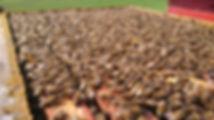 arnia della società agricola sandroni