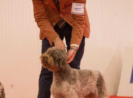 Mocha Takes 3rd at Lagotto Specialty in Lugo, Italy