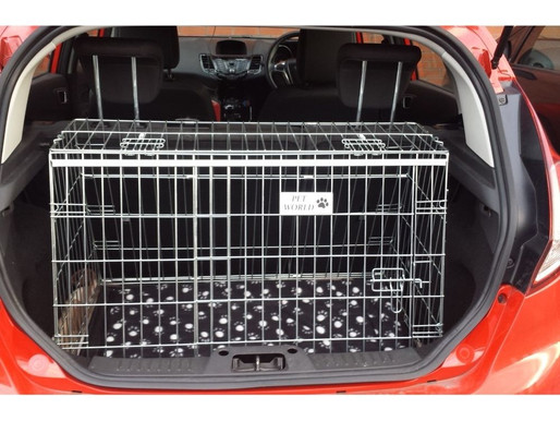 Puppy Safety When travelling