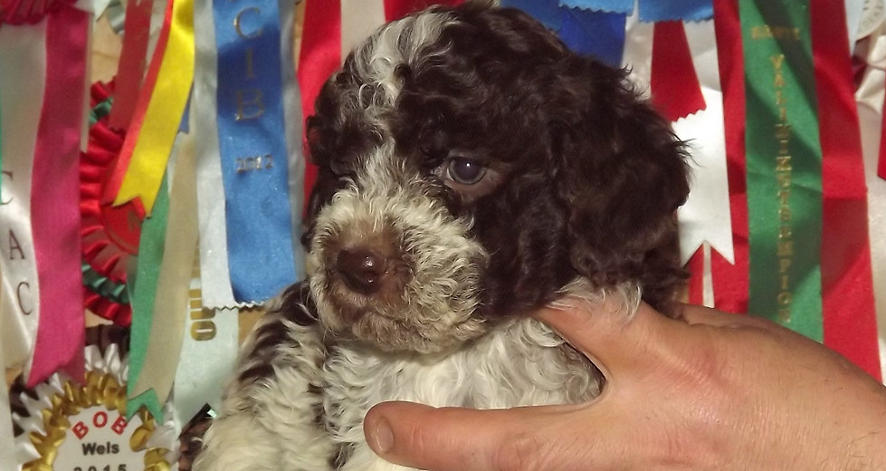 Puppy care strip background
