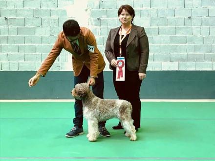 Mocha Wins Best of Breed in Slovenia