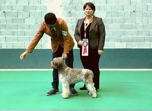 Mocha Wins Best of Breed in Slovenia