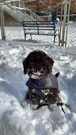 GIO in Snow.jpeg
