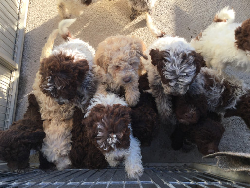 Why Puppy Culture Protocols