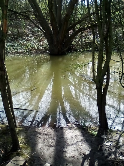 Glanderbarry tree - Copy.jpg