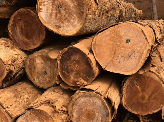 PGWood Tagged Hardwood Log 2.jpg