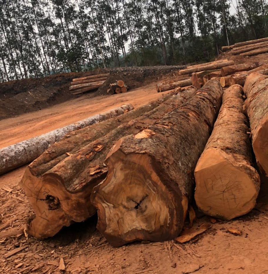 PGWood Tagged Hardwood Log 1.jpg