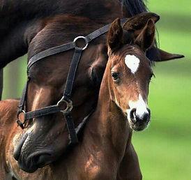 Horse-Nuzzle-632x596.jpg