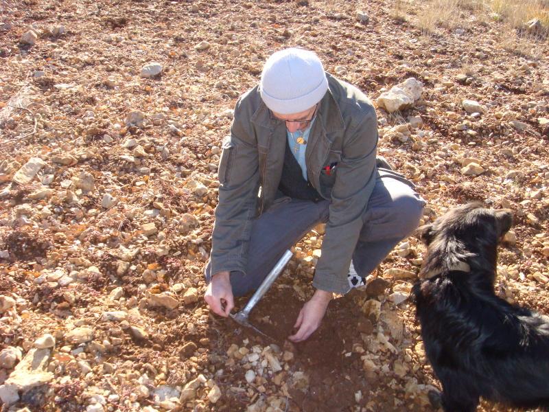 A la recherche des truffes