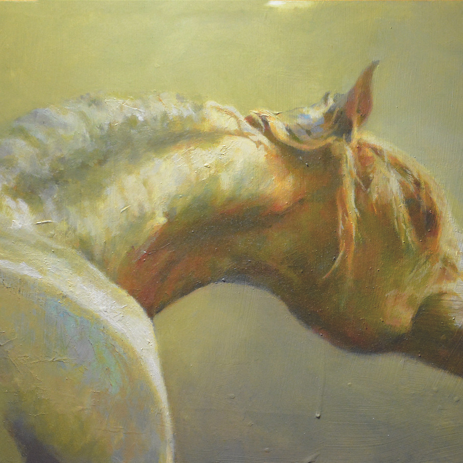 """Horse Profile"""