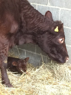 Fiona and newborn Myrna!