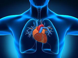 Heart & Lungs 2.jpg