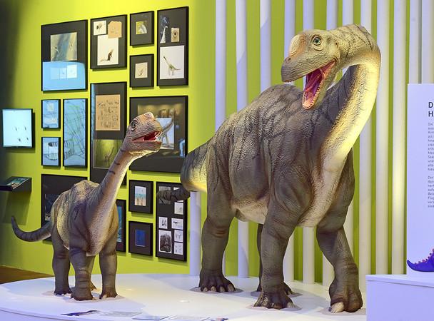 Europasaurus holgeri