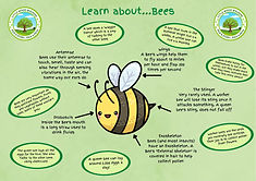 Learn about Bees.jpg