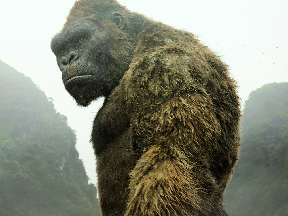 A picture of Kong from the movie Kong - Skull Island