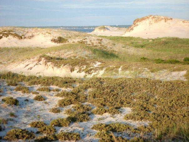 Cranes Beach Dunes Essex, MA