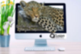 Leopard-out-of-screen.jpg