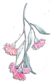 eucalyptus-flower-2-web-shaddow.png