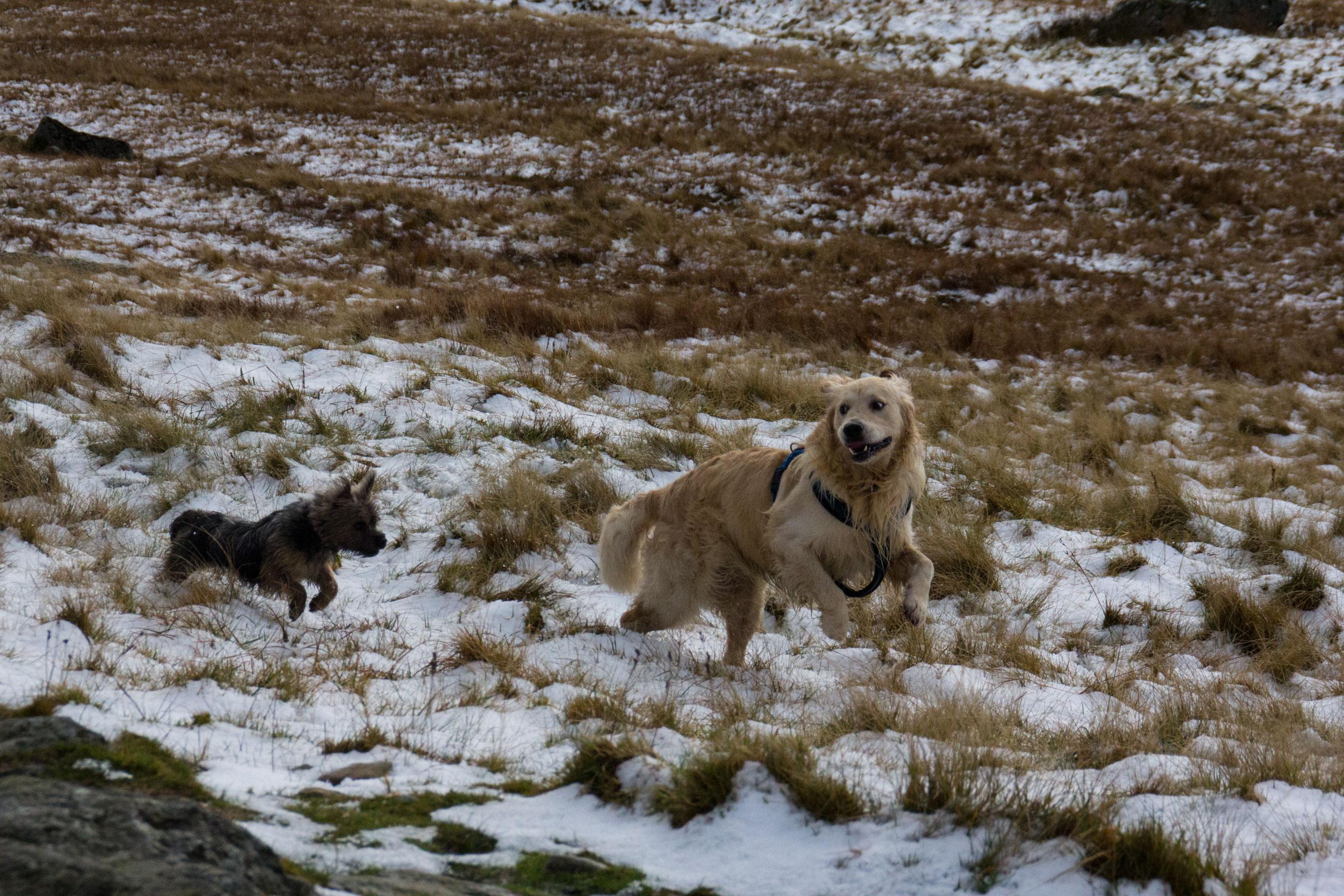 Loki in Snowdonia