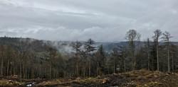 Eastridge mist