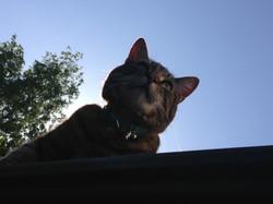 Echo the cat