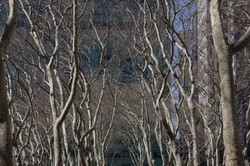 Trees behind the Library