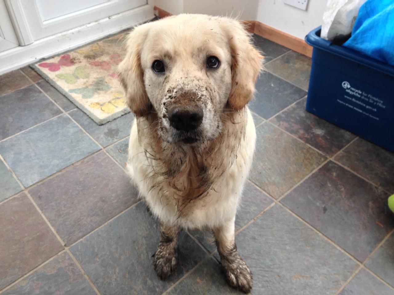 Muddy Loki