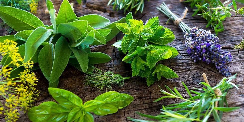 Plantando seu Jardim Medicinal e Gastronômico