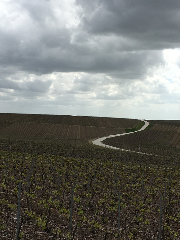 Day 7 - Reims to Chalon-en-Champagne