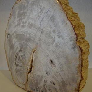 versteinertes Holz 59,- aus Indonesien