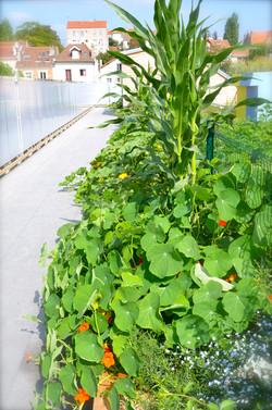 toiture jardin au printemps