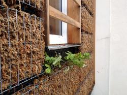 Zoom sur la façade végétalisée