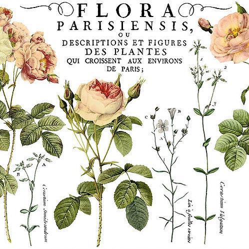 "Flora Parisiensis Transfer 24""x33"""