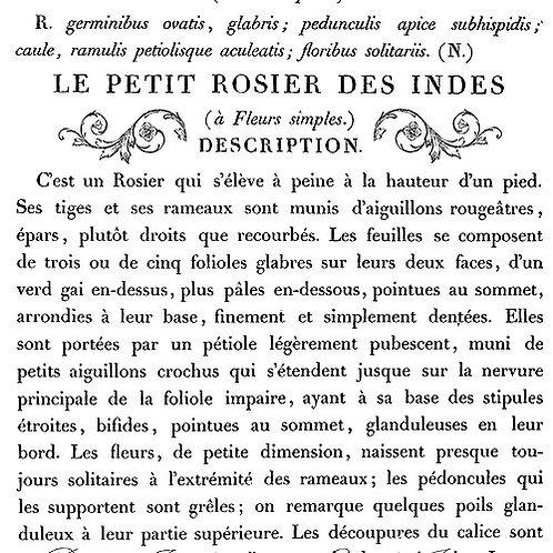 "Le Petit Rosier Transfer 24"" x 33"""