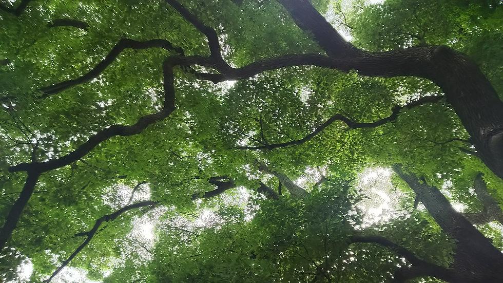 土浦市の八坂神社